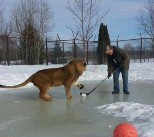 hockey lions2