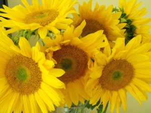 sunflowers_closeup