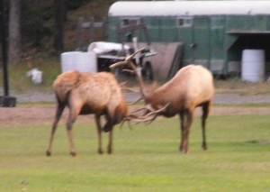 Some friends in a soccer field by the Fairmont..